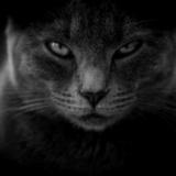 【第20話】宣伝講習販売のリアル|催眠商法?ブラック企業の会議は激詰め会議!